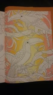 Duo de toucans (1)