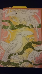 Duo de toucans (2)