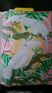 Duo de toucans (4)