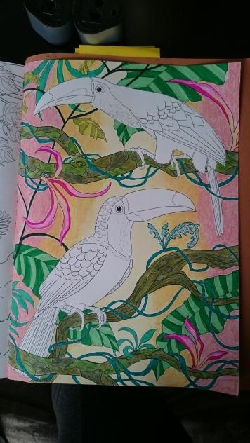 Duo de toucans (5)