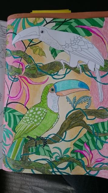 Duo de toucans (8)